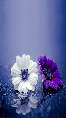 free flower wallpaper for phone flowers apple iphone 5s hd wallpapers available for