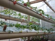 culture des fraises hors sol association des jardins