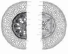 Modul Pilihan Struktur Dan Fungsi Tumbuhan