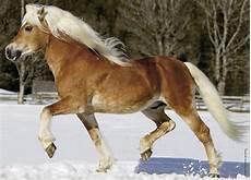 pferde günstig kaufen bis 1000 pferd 100 teile nathan puzzle kaufen