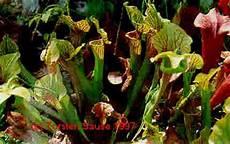 Cp Carnivorous Plants Fleischfressende Pflanzen