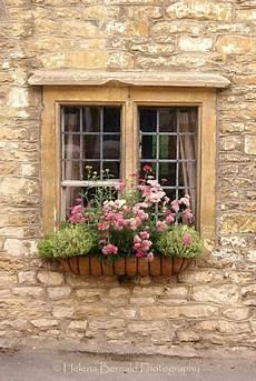 fioriere per davanzale finestra marguerites at the window window boxes fioriere per
