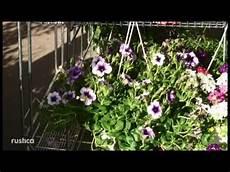 fleur vivace plein soleil fleurs d 233 t 233 et vivaces pour jardini 232 res au soleil