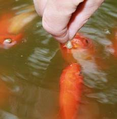 the best goldfish pond food 2019 nutrition analysis