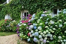 Pin Ursula B Auf Flowers And Garden Blumen Und Garten