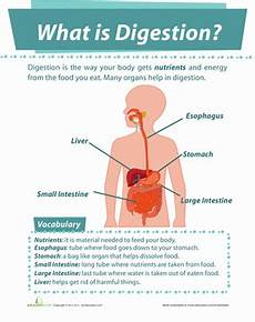 what is digestion worksheet education com