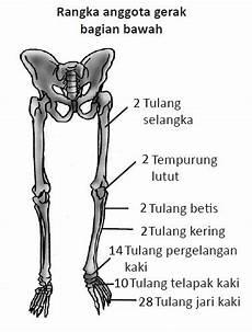 Struktur Dan Fungsi Tulang Otot Dan Sendi Pada Manusia