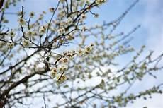 26 Gambar Flora Dan Fauna Negara Jepang Istimewa