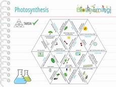 ks3 plants photosynthesis worksheets 13619 photosynthesis plant reproduction 13x activities and teaching resources