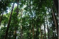Hutan Lipur Besul Travel Guide Makan 178 Guide