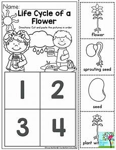 worksheets on plants cycle 13606 plant cycle for kindergarten worksheet briefencounters