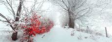landscape beautiful nature bush alley leaves winter snow panorama fog morning merry christmas