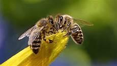 Imker Schlagen Alarm In Berlin Sterben Die Bienen Weg