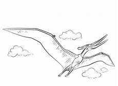 dibujos para colorear pteranodon imprimible gratis para