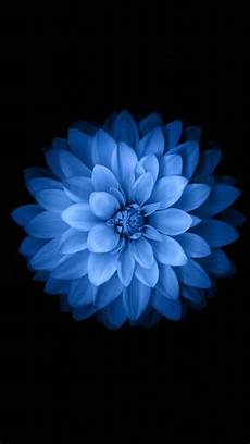 blue green flower wallpaper iphone image for iphone 6s blue flower hd wallpaper 19re