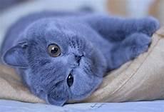 Animal With Blue Fur