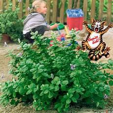 verpiss dich pflanze kaufen bei g 228 rtner p 246 tschke