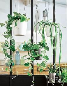 plante suspendue verre les plantes suspendues 233 gayeront votre int 233 rieur