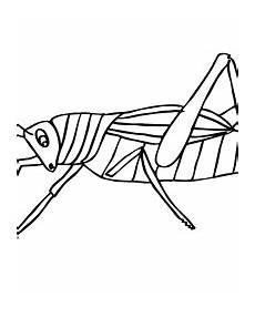 malvorlagen insekten kostenlos zum ausdrucken