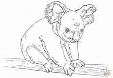 Malvorlagen Zum Ausdrucken Wombat Ausmalbild Koala Sitzt Auf Einem Zweig Ausmalbilder