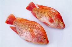 Info Ikan Nila Harga Per Kg Terbaru 2020 Jenis Dan