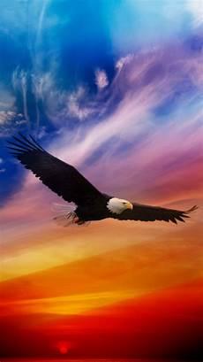 bald eagle iphone wallpaper flying eagle dramatic sky iphone 6 wallpaper iphone