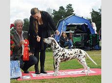 Västra Kennelklubbens nationella hundutställning 2012