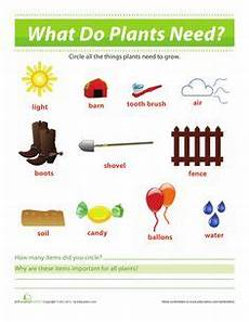 what plants need worksheets grade 13590 1000 images about science on