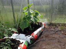 was macht mit tomatenpflanzen im herbst was kann