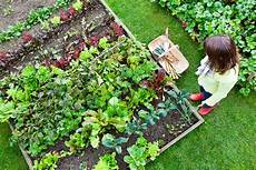 backyard vegetable garden eartheasy guides articles