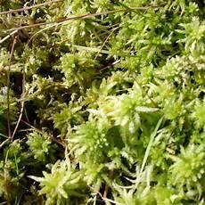 pflanzen shop günstig naturagart shop torfmoos kaufen