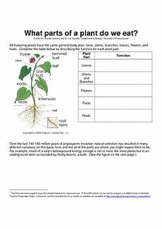 what parts of a plant do we eat worksheet for 8th 12th grade lesson planet