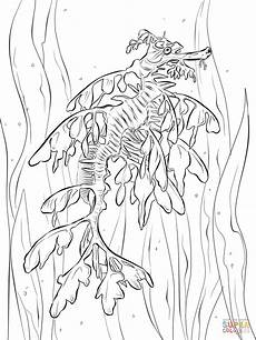 realistic leafy seadragon coloring page free printable