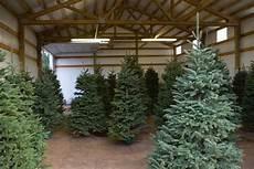 wann weihnachtsbaum aufstellen