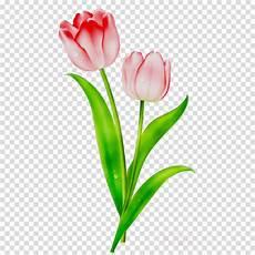 17 Lukisan Bunga Tulip Kartun Gambar Kitan