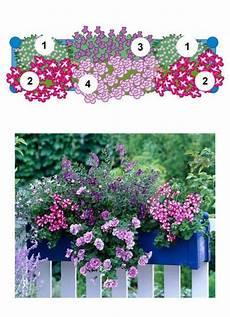 blumenkasten bepflanzen ideen bilder balkonblumen fantasievoll kombiniert balkon blumen