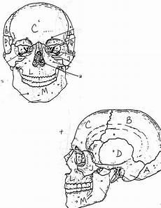 Human Skull Anatomi Coloring Pages Bulk Color Dengan