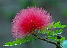 Malvorlage Exotische Blumen Exotische Blume Auf Teneriffa Foto Bild Pflanzen