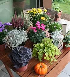 balkonpflanzen herbst winter der winter kommt bestimmt herbstblumenkasten bepflanzen