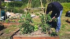 fare l orto in giardino primo orto giardino piantumazione tageti