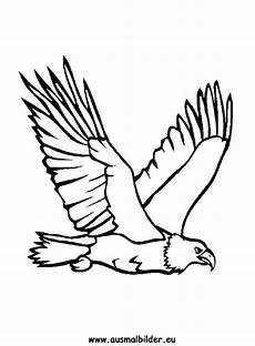 Ausmalbilder Zum Drucken Adler Ausmalbild Adler Zum Ausdrucken