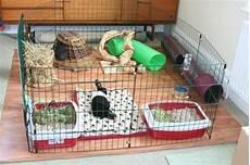 gabbia coniglio prezzo gabbia per conigli conigli caratteristiche delle