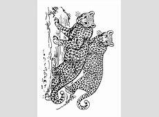 Coloriage léopard   img 16631