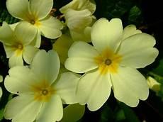 blumen klein flowers this and that