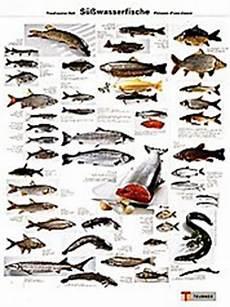 fischarten liste mit bildern essbarer mittelmeerfisch flanell schlafanzug damen rot