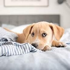 welcher hund passt zu mir test welcher hund passt zu mir mach den test brigitte de