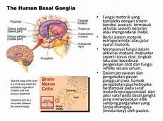 Bagian Otak Yang Mempunyai Fungsi Untuk Mengatur