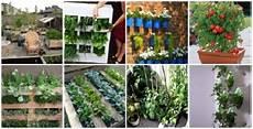 giardino verticale fai da te giardino verticale fai da te idee green