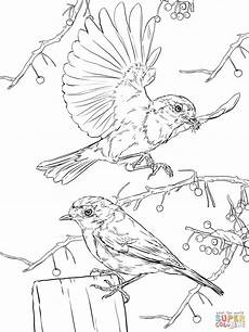 european robins coloring page free printable coloring pages