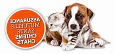 avis conseils feuille assurance chien april
